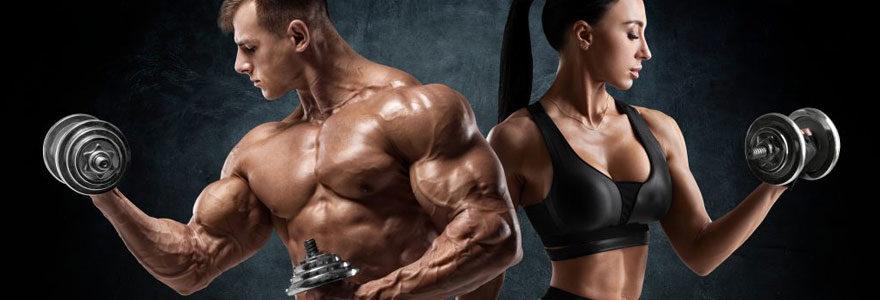 Construction des muscles
